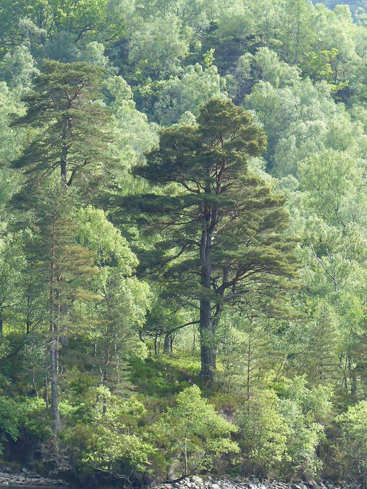 l'arbre dans la forêt